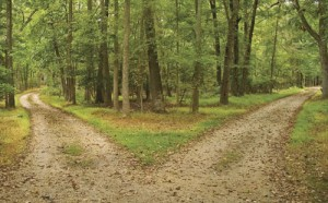 Two Roads Diverged in the Woods