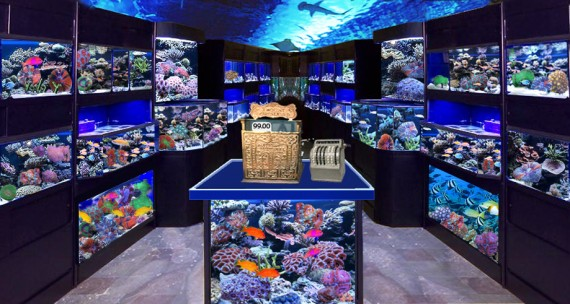 Stocking up on fish for Pet stores that sell fish