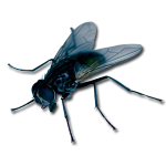 flies_big