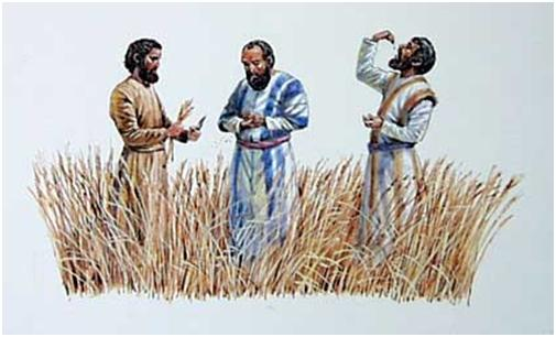 eating grain on the Sabbath Luke 6 1-5