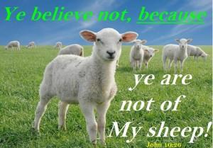 sheep John 10 26