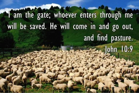 sheep john 10