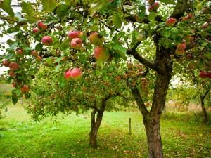 good tree good fruit Jesus
