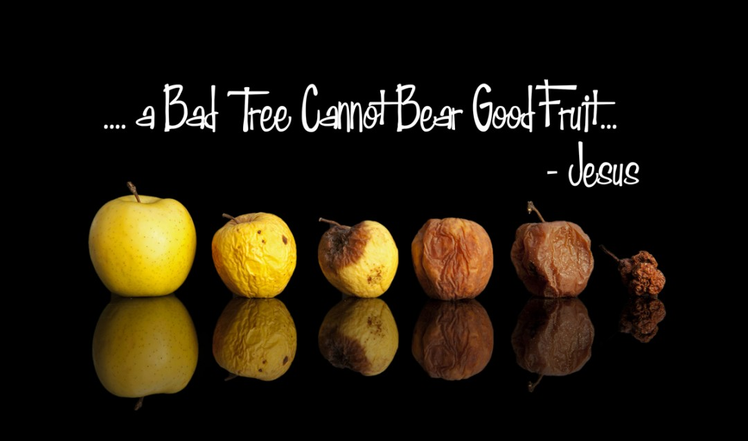 Good tree good fruit Luke 6:43-45