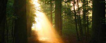 [#43] Genesis 3:8-10 – Do Not be Afraid