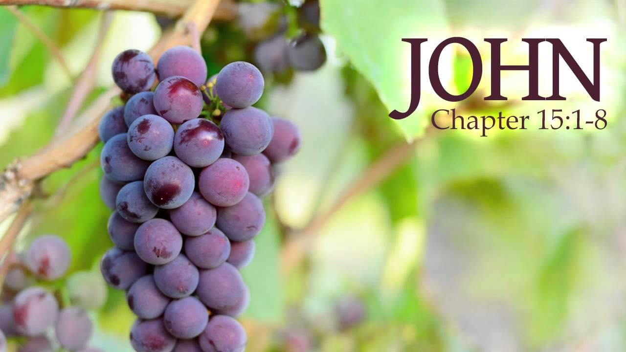 John 15:1-8 vinedresser