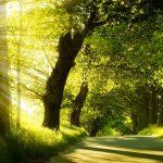 Gospel light brings delight