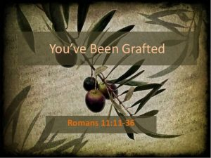 branches grafted in Romans 11 election