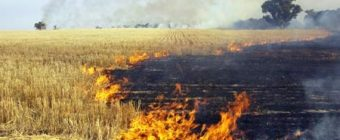 chaff and stubble getting burned